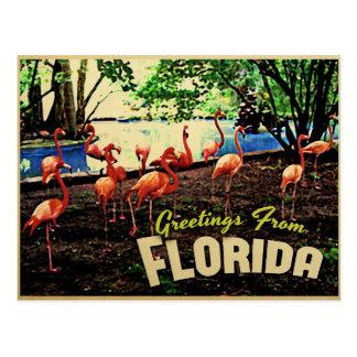 Florida Pink Flamingos Post Card