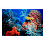 Florida Reef Posters