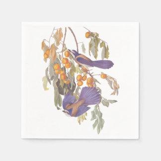 Florida Scrub Jay Audubon Bird on Orange Tree Paper Napkin