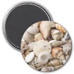 Florida Sea Shell Background - Beach Shells Custom