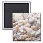 Florida Sea Shell Background - Beach Shells Custom Square Magnet