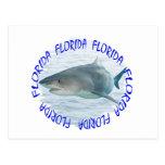 Florida shark postcards