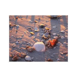 Florida shells canvas print