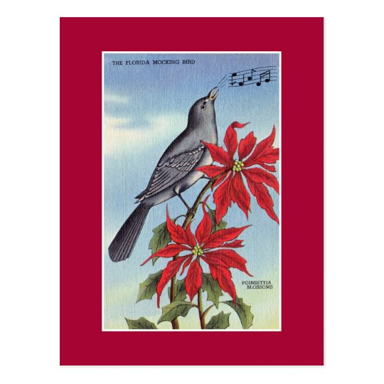 Florida state bird and flower (mockingbird) postcard