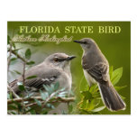 Florida State Bird - Mockingbird