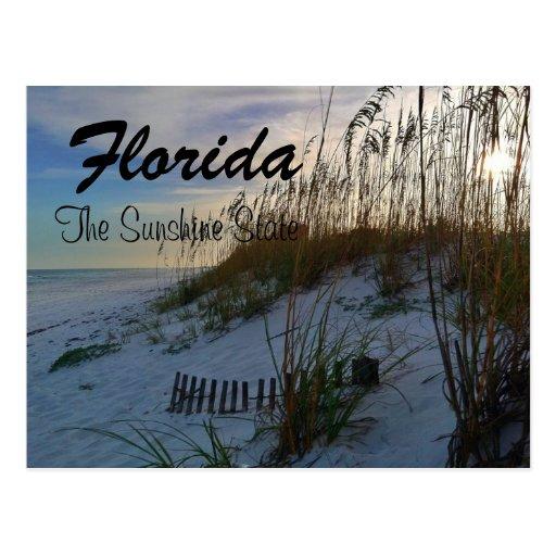 Florida Sunshine State Postcard
