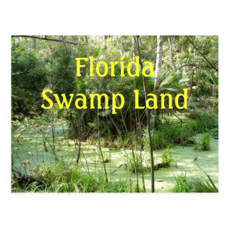 Florida Swamp Postcard