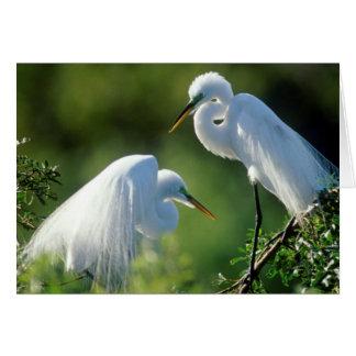 Florida, Venice, Audubon Sanctuary, Common Egret Card