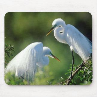 Florida, Venice, Audubon Sanctuary, Common Egret Mouse Mat