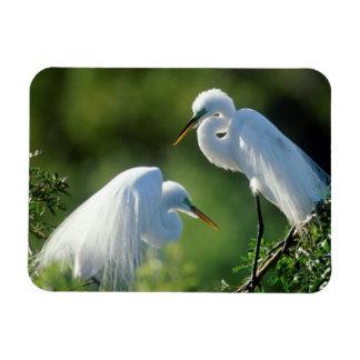 Florida, Venice, Audubon Sanctuary, Common Egret Rectangular Photo Magnet