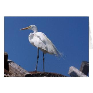 FloridaBird Card