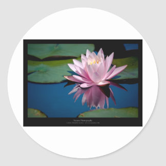 Flower 005 Pink Water lily Stickers