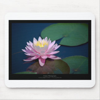 Flower 006 Water lily Mouse Pad