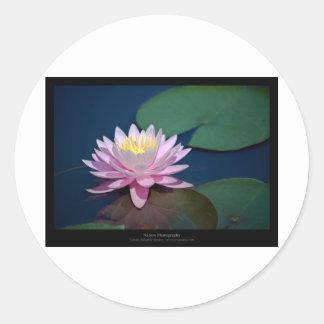 Flower 006 Water lily Round Stickers