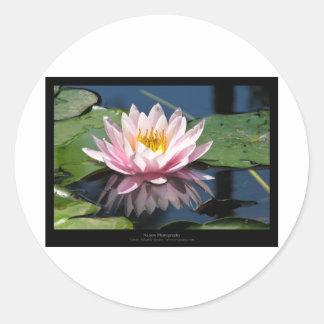 Flower 007 Water lily Round Sticker