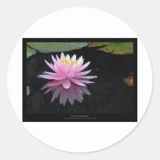 Flower 017 Pink Water Lily Round Stickers