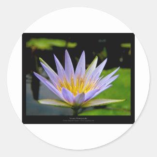 Flower 026 Blue Water Lily Round Sticker