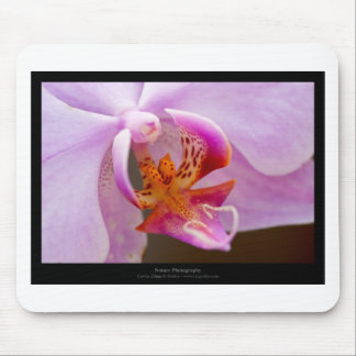 Flower 034 Pink orchid Mouse Pad