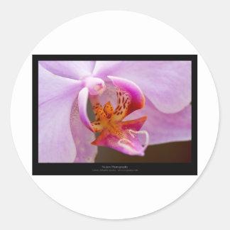 Flower 034 Pink orchid Sticker