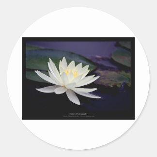 Flower 039 White Water Lily Sticker