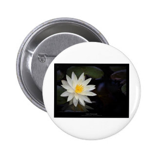 Flower 055 White Water Lily 6 Cm Round Badge