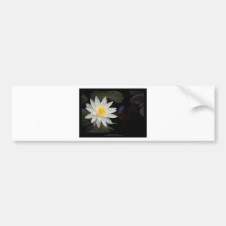 Flower 055 White Water Lily Bumper Sticker