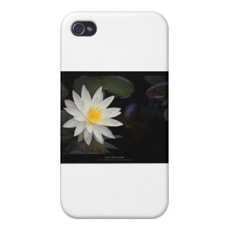 Flower 055 White Water Lily iPhone 4 Case