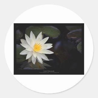 Flower 055 White Water Lily Sticker