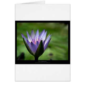 Flower 058 Blue Water Lily Greeting Card