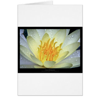 Flower 061 White Water Lily Greeting Card