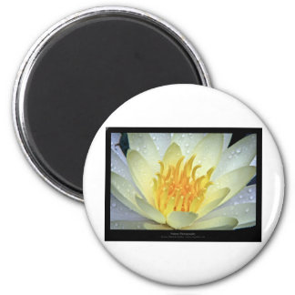 Flower 061 White Water Lily 6 Cm Round Magnet