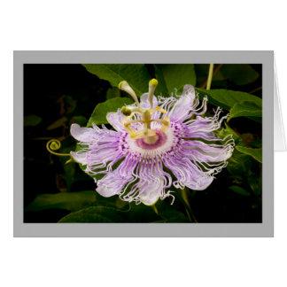 Flower 15 Purple passion flower Greeting Card