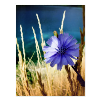 flower 1 post card