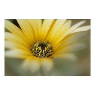 Flower #1 yellow daisy poster