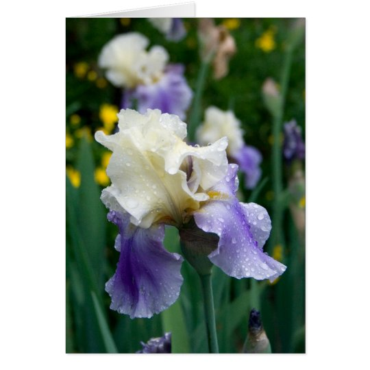 Flower #2090 card