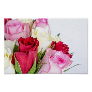 flower-316621 flower flowers rose love red pink ro poster