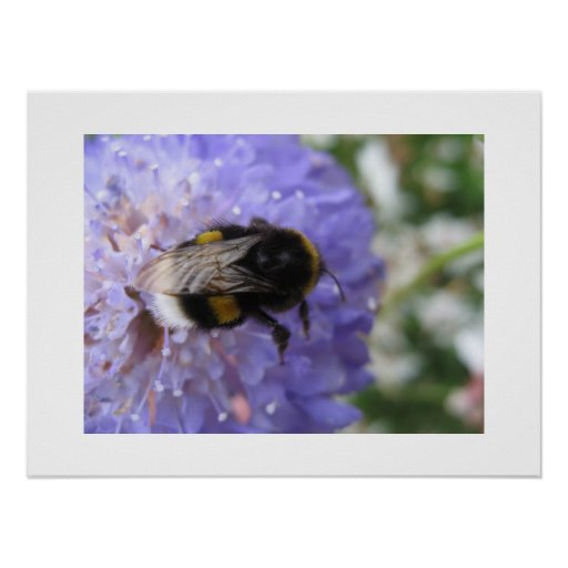 Flower and bee poster