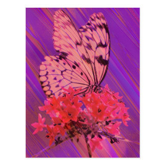 Flower and Butterfly in Pink and Purple Postcards