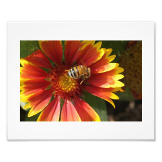 Flower and The Bee Photo Print