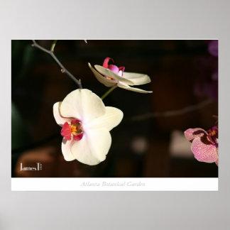 Flower - Atlanta Botanical Garden Posters