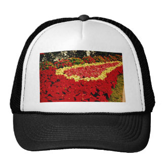 Flower bed red white and pink poinsettias flowe hats