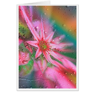Flower before the rainbow card