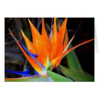 Flower Bird of Paradise Cards