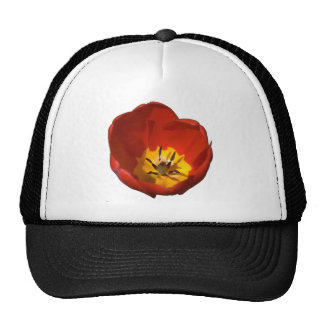 Flower bloom tulip cap