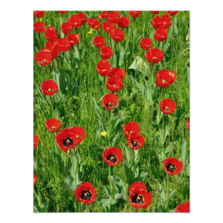 FLOWER BLOOMS POSTERS