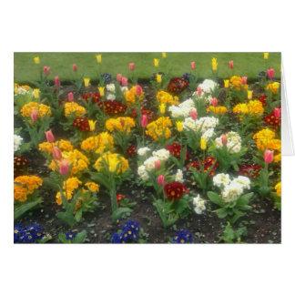Flower border in the rain, Bury St Edmunds Card