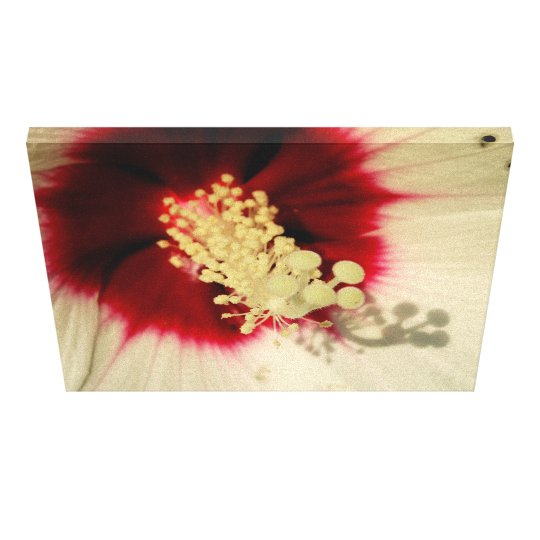Flower Close Up Photo Single Art Poster Canvas