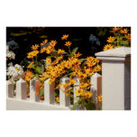 Flower - Coreopsis - The warmth of Summer Poster