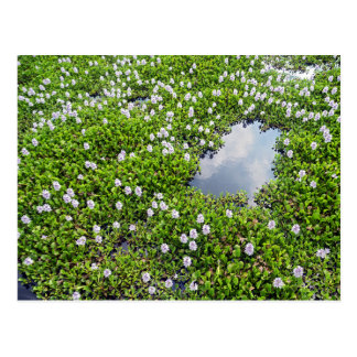 Flower Covered Lake, Imperial Tomb of Thieu Tri Postcard