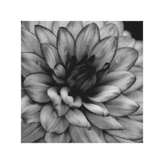 Flower Dahlia Gallery Wrap Canvas